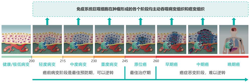 细胞图-中文0927-04